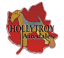 Hollytroy Airedales