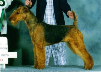 Molly - Ch Hollytroy Designer's Genes BOS and WB, ATCC National Specialty