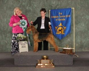 Dina - Multi BIS Ch Serendipity Wings Over Hollytroy.  BOS ATCC National Speciality at 9 years of age